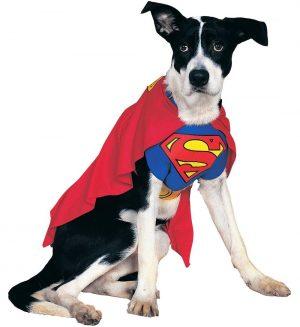 Costum Catel Superman